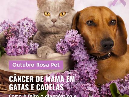 Câncer de mama em gatas e cadelas: diagnóstico e tratamento