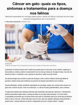Câncer em gatos: tipos, sintomas e tratamentos