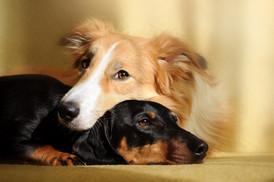 Não quero que meu cão sofra (parte 2)