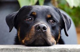 Meu cão / gato está com câncer: o que preciso saber para ajudá-lo? Parte II