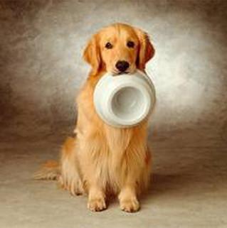 Como alimentar cães e gatos com câncer?