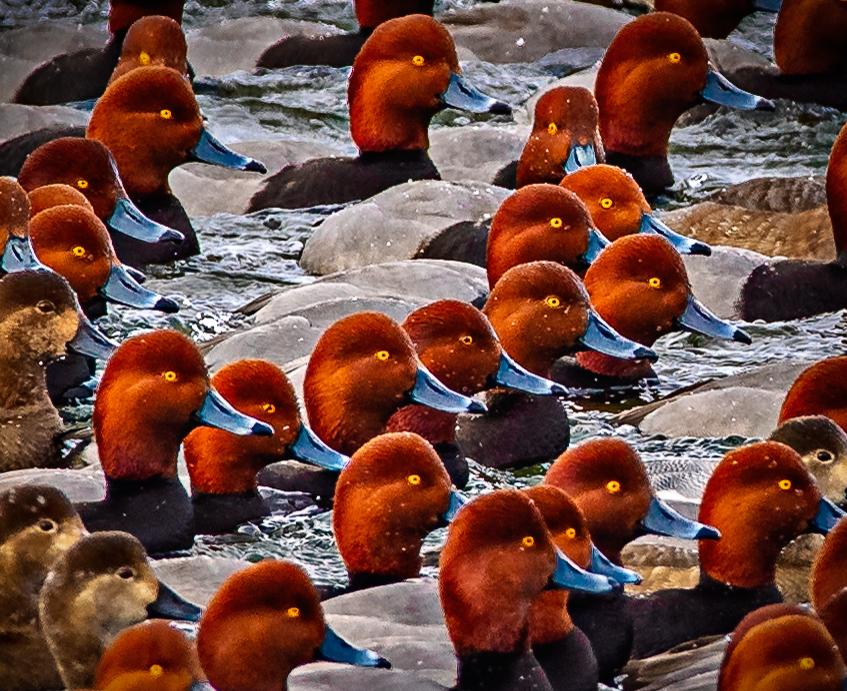 Birds of NY State