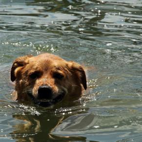 Kooper the Dim and his Midnight Swim