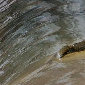 Conesus Inlet Wildlife Management Area