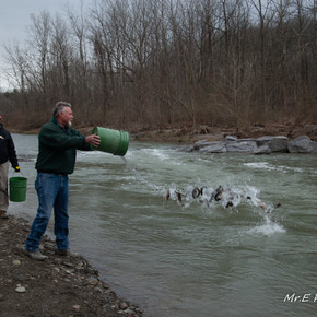 Trout fishing in Livingston County