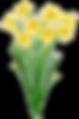 daffodil-clipart-yellow-daffodil-3.png