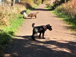 Copyright 2018 'Doggy Walks'