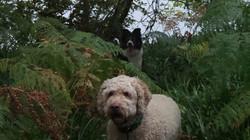Copyright 'Doggy Walks' 2018