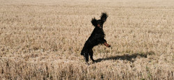 copyright 'Doggy Walks' 2020