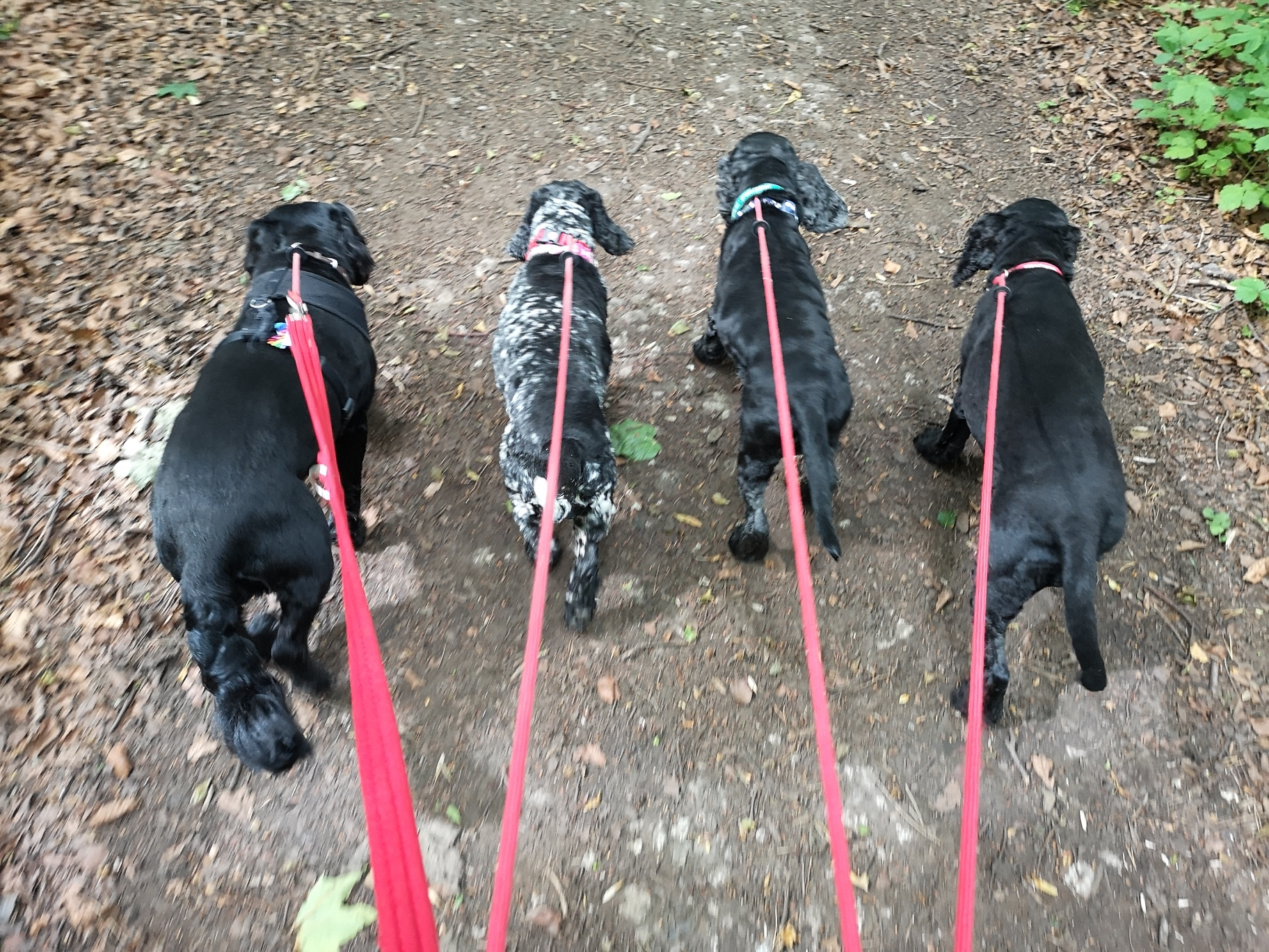 Copyright 2019 'Doggy Walks'