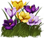 transparent-spring-flower-15.png