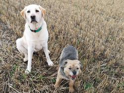 Copyright 2019 'Doggy Walks'