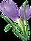 violet-clipart-prairie-crocus-12.png
