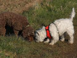 Copyright 2020 'Doggy Walks'