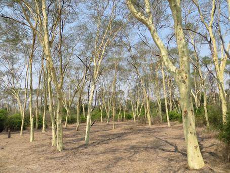 Nyala Park: Under the Fever Trees