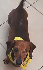 Ellie dog.png