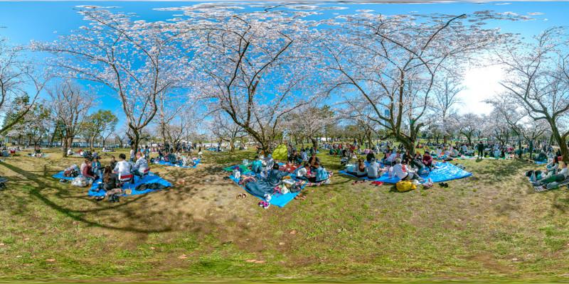 駿府城公園桜宴会2.jpg