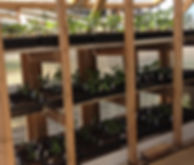 greenhouse 2018-05-20.jpg
