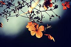 Takje met kleurig bloemetje.jpg
