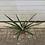 Thumbnail: Pineapple Plant Large