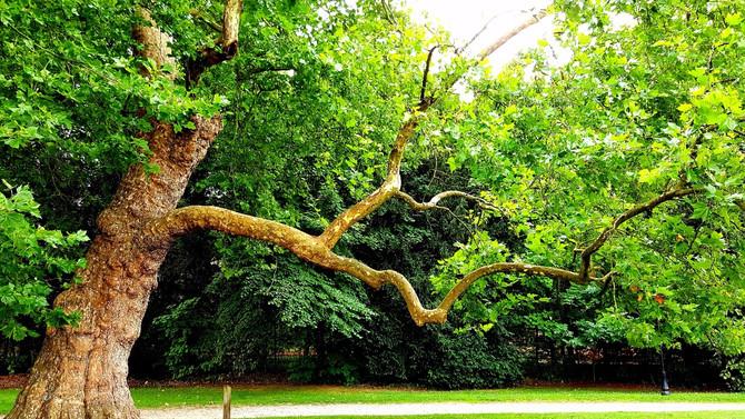 Retrouvez l'énergie grâce aux arbres.