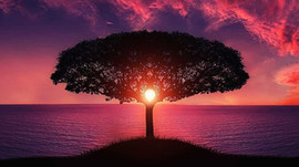 Calmer son mental... la voie du bonheur