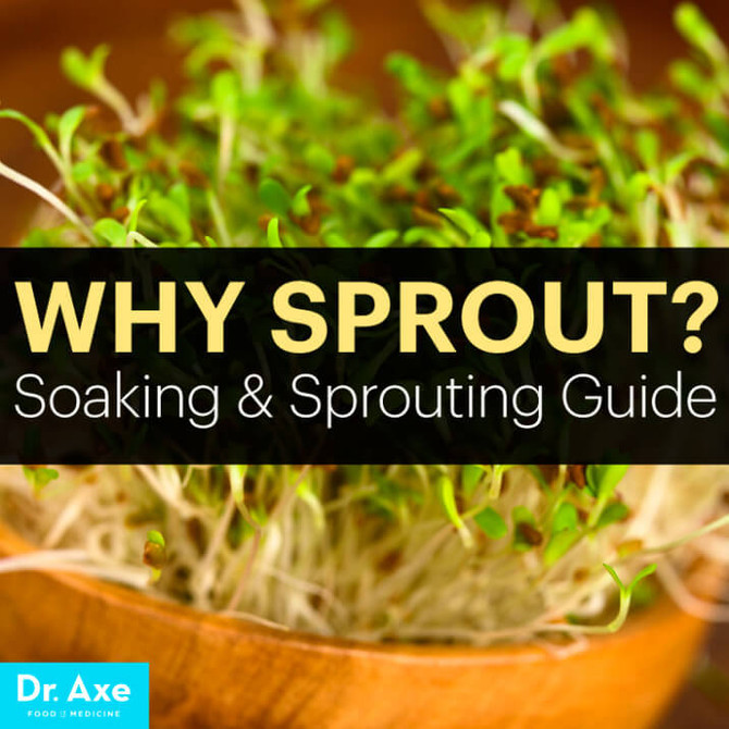 Sprout Guide: How to Sprout Grains, Nuts & Beans