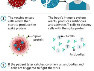 Oxford-AstraZeneca coronavirus vaccine approved for use in UK