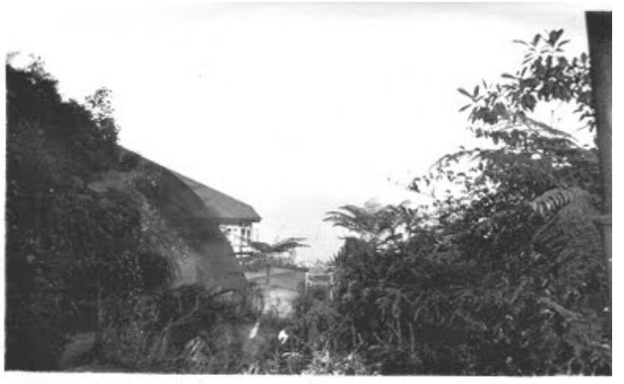 bukit kutu bungalow, bukit kutu