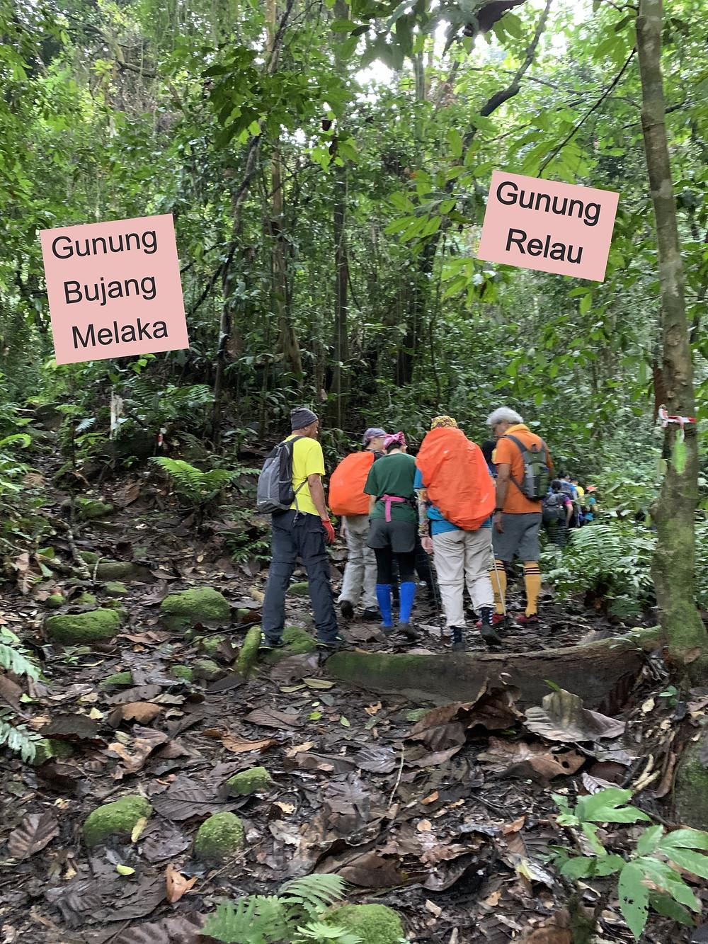 gunung relau, gunung relau kampar, malaysia hikes, cannon hill