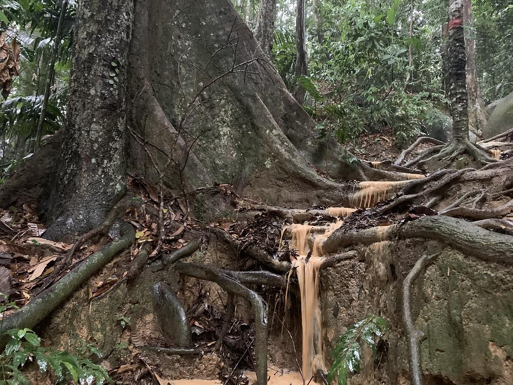gunung datuk, gunung datuk rembau, malaysia hikes