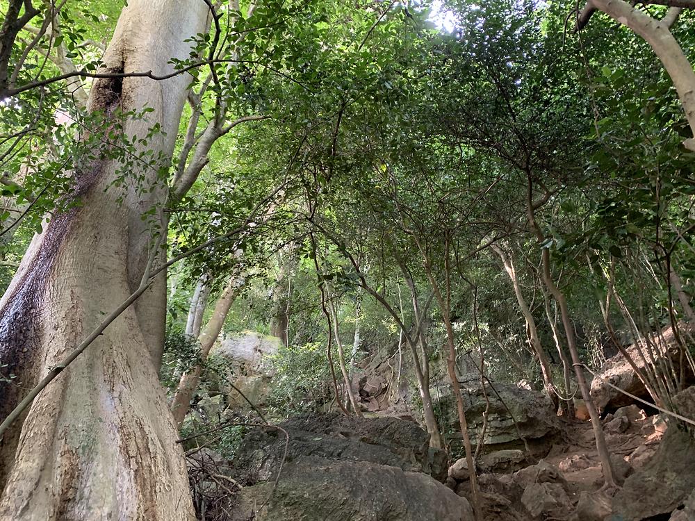 bukit kodiang, bukit kodiang hike, bukit kodiang@mokchun