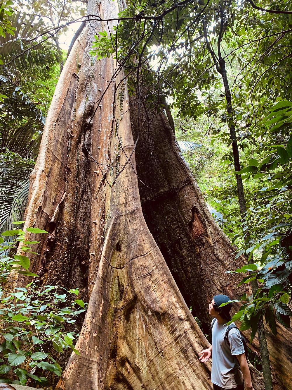 pokok rembau, gunung datuk, gunung datuk hike