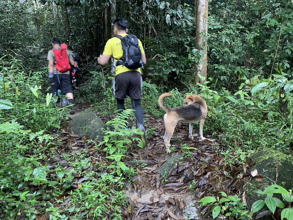 gunung relau hike, hike malaysia, cannon hill, gunung relau kampar