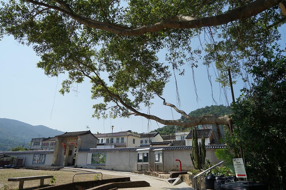 Lai Chi Wo Abandon Hakka Village