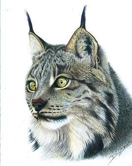 Lynx by Denise Zanetta.jpg