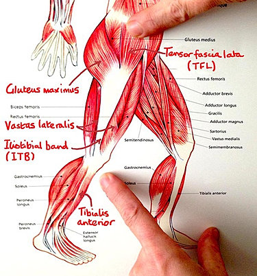 iliotibial band syndrome, Cephalic Vein