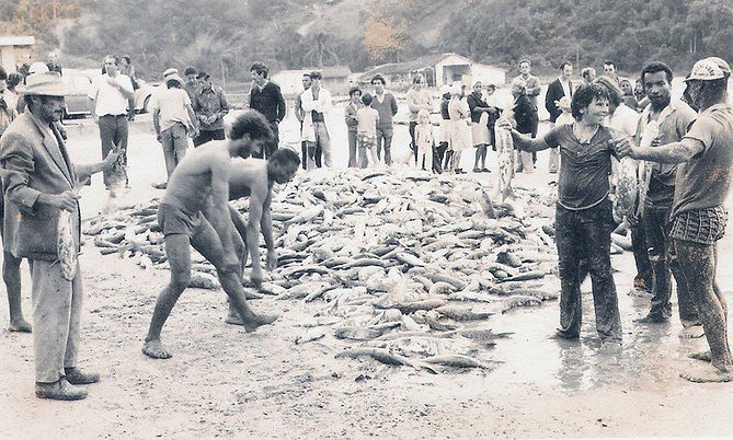 Década de 1960 - lance de taínha no Ca