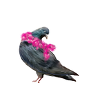 bird%25201_edited_edited.png