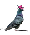 bird%2525201_edited_edited_edited.png