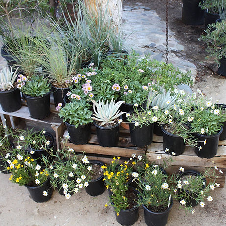California Native Plant Landscape Conversion Kit