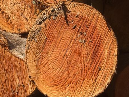 Cedro AustralianoProdução de compensado naval 100% cedro australiano