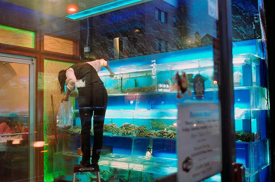 Yuqing Zhu film photography. Philadelphia Chinatown seafood restaurant.