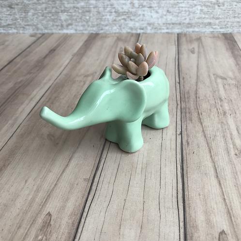 Matera Elefante