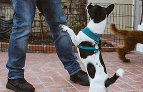 dog-training-obedience-image-1.jpg