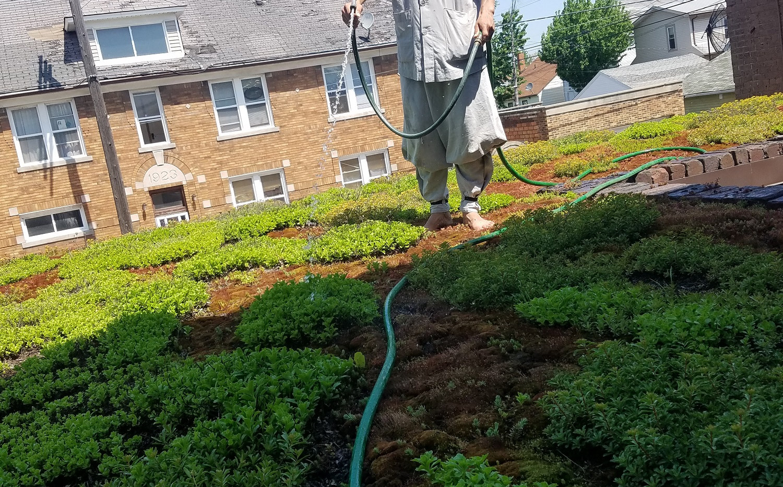 hyangil sunim watering green roof.jpg