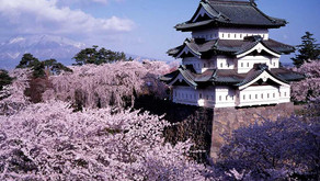 Hanami di Castle Peninggalan Sejarah Jepang
