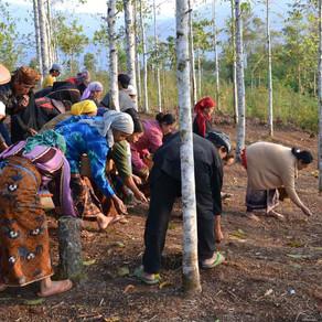 Tetap Terjaga! Desa Adat Kasepuhan Ciptagelar, Sukabumi