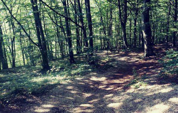 Percorsi ciclabili stupendi in mezzo ai boschi