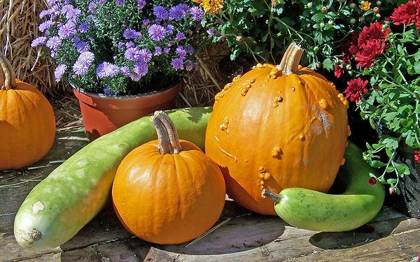 pumpkins-19516_1920.jpg